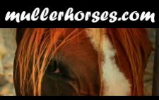 escuela de equitación Mullerhorses